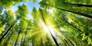 Finance Verte : la Commission Européenne prête à encadrer les 'investissements verts'
